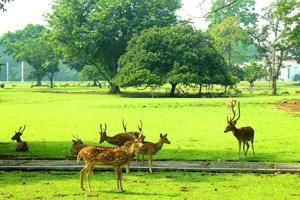 deer-in-bogor-botanic-garden
